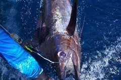 marlin-2-costa-rica