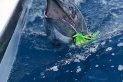 marlin-costa-rica