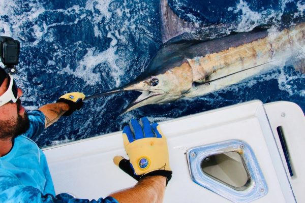 Marlin on Mahi Morsel Lure