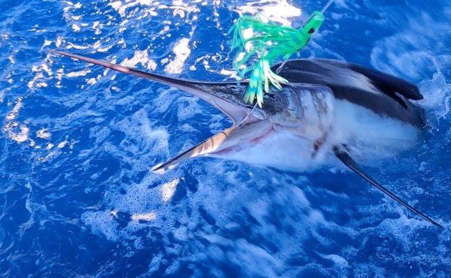 Marlin on MagBay Lummee Lure