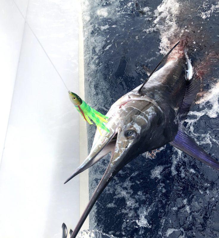 Marlin on Green Phoenix