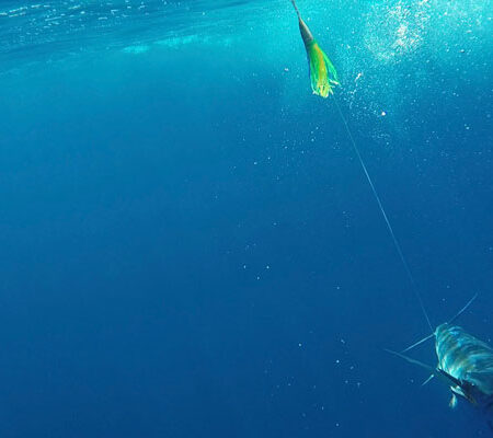 Marlin on MagBay Green and Yellow Phoenix Lure