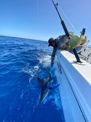Marlin on Carey Chen Tuna Lure