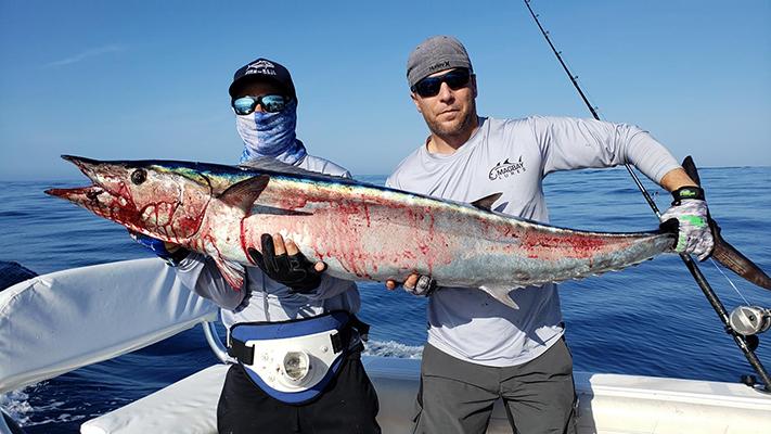 Marlin on Blue Plomerito Lure